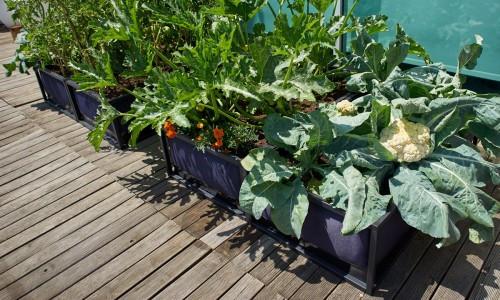 Tipps und Tricks rund ums Urban Gardening