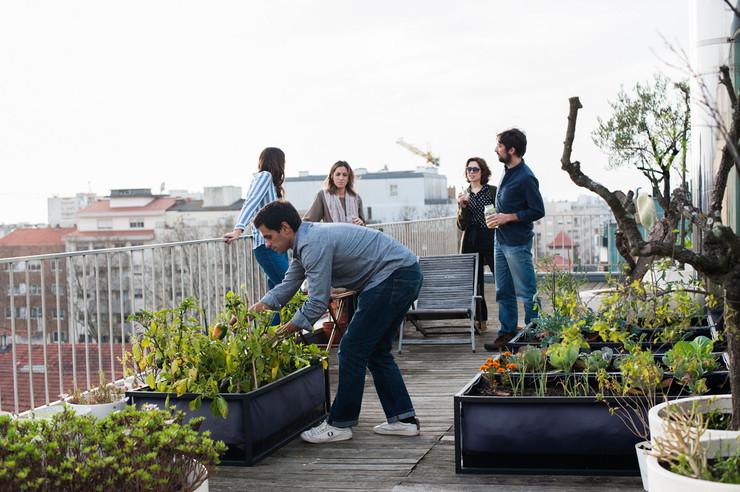 Urban Farming in der Schweiz - Sinn oder Unsinn?
