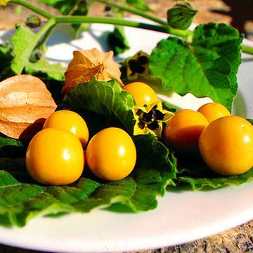 Gemüse selber aussäen im Februar