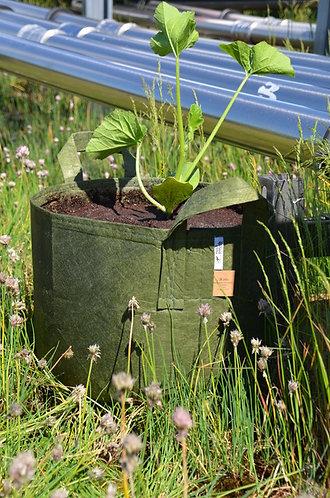 Root Pouch - Pflanzentasche mit Tragegriff - 39 Liter - grün
