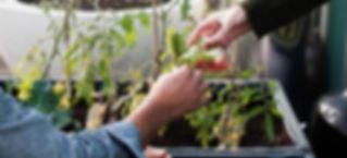 Home Farming Solutions - Balkon- und Terrassengestaltung - Stadtgarten - Pflanzbeet Noocity Growbed - Urban Gardening