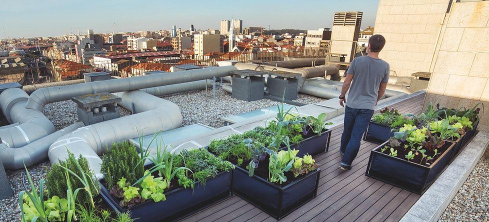 Pflanzbeet NooCity Home Farming Solutions