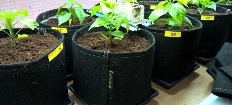 Gronest - Pflanztopf - Home Farming Solutions - Balkon- und Terrassengestaltung - Stadtgarten - Urban Gardening