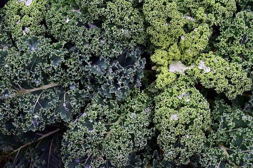 Auch im Winter gibt's frisches Gemüse aus dem eigenen Garten