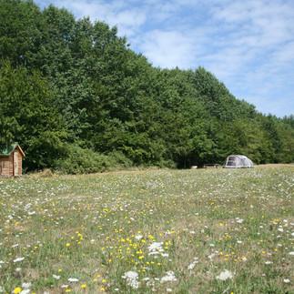 Chêne_meadow.jpg