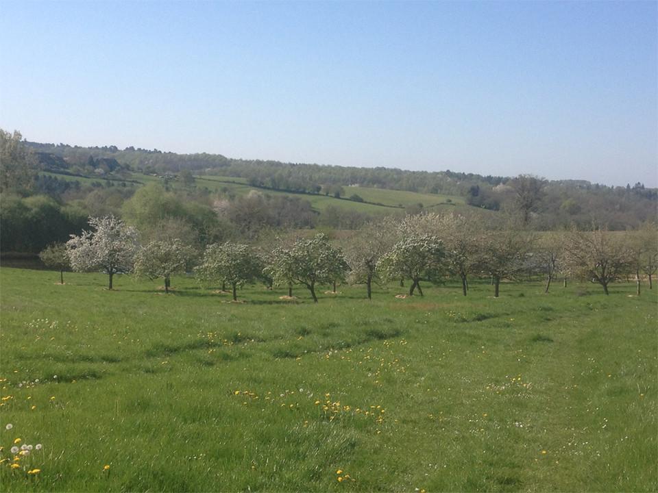 Bellessise Orchard.jpg