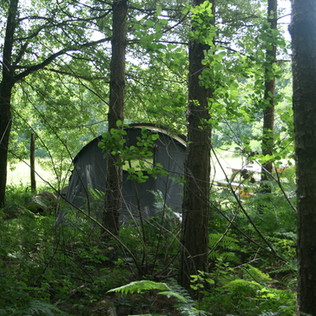 Tent in the trees Sapin.jpg