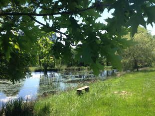 Lower lake in summer.jpg