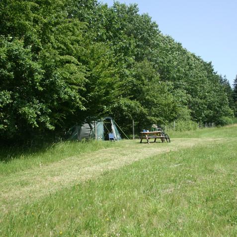 Charme alone in a field.jpg