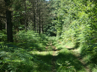 Sunny Woodland Walk.jpg
