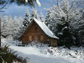 Snowy Pomme De Pin.jpg