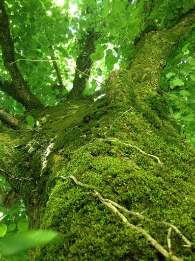 Oak Tree Bark.jpg