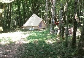 Bell Tent Woodland.jpg