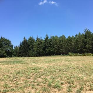 Camping pitch Sapin.jpg