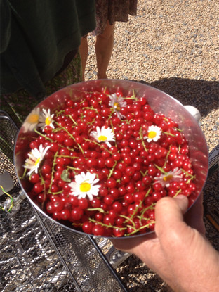 Redcurrant bowl.jpg