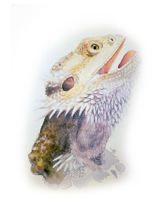 Bearded Dragon.jpg