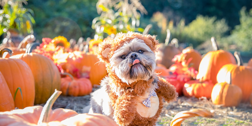 SOLD OUT Oct 12th - Pumpkin Puppies Halloween Photoshoot Fundraiser