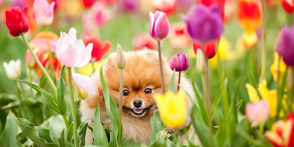 April 29th Petal Puppies Fundraiser