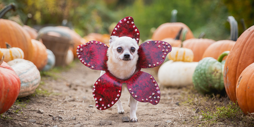 (SOLD OUT) Oct 17th - Pumpkin Puppies Halloween Photoshoot Fundraiser