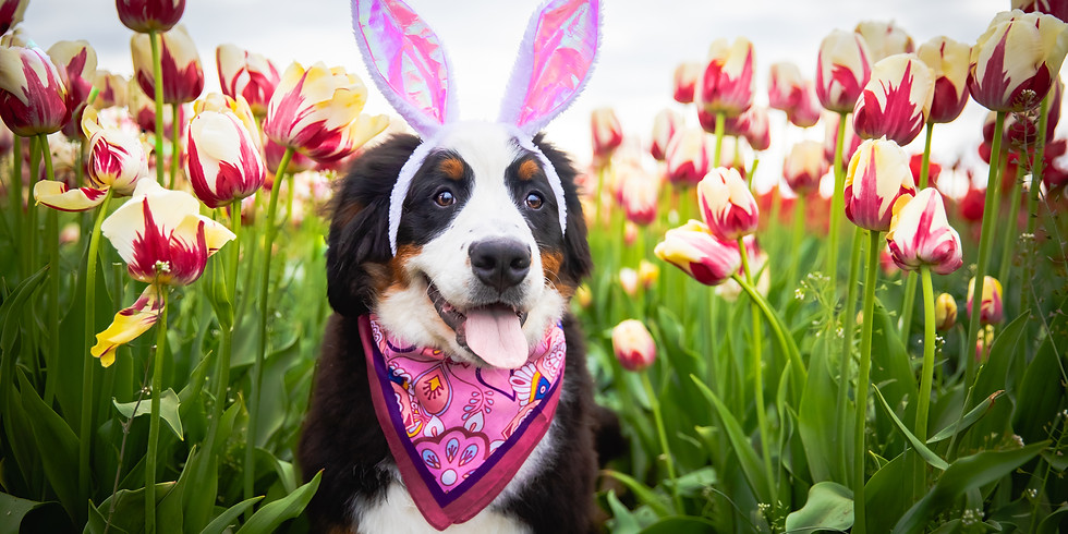 (CANCELLED) Biscuits, Bonnets and Bows : An Easter Photoshoot Fundraiser