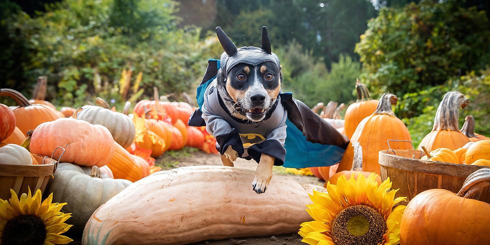 SOLD OUT (SAT) Oct 16th - Pumpkin Puppies Halloween Photoshoot Fundraiser