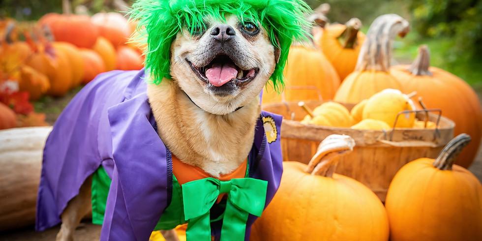 SOLD OUT (SUN) Oct 17th - Pumpkin Puppies Halloween Photoshoot Fundraiser