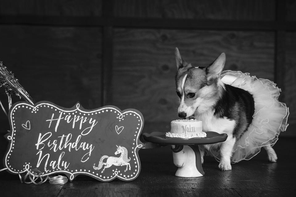 Nalu's Birthday-3456.jpg