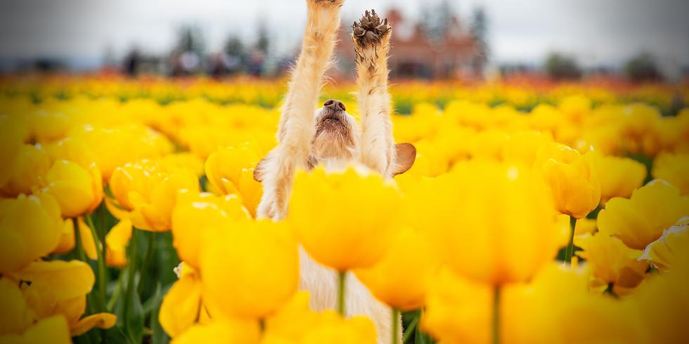 (CANCELLED) Petal Puppies - April 16th (THURSDAY)