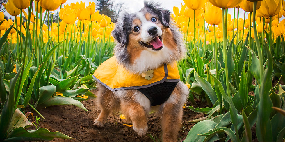Petal Puppies - April 27th (Saturday) - SOLD OUT
