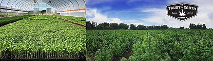 seedtoharvest1.jpg