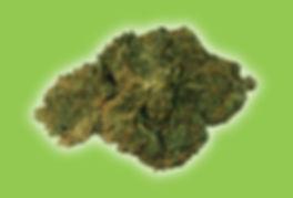 Pineberry_hemp_flower_trust_the_earth_he