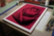 rose.closeup.jpg
