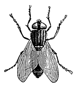 fly2.tif