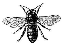 fly1.tif