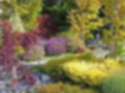 shrubs and plants.jpg