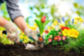 Flowers planting.jpg