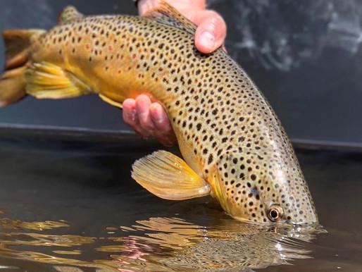 Fishing Report 7/31/19