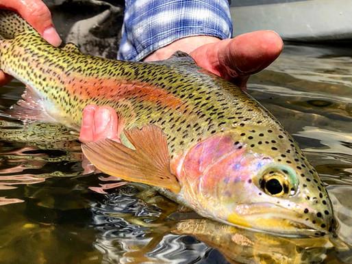 July 3rd Fishing Report