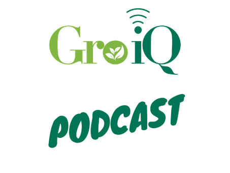 Podcast:  What's Killing MSOs?