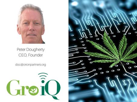 What's Killing Cannabis Multi-State Operators?