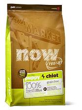 now fresh puppy chiot ovosi.jpg