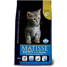 matiss kitten.jpg