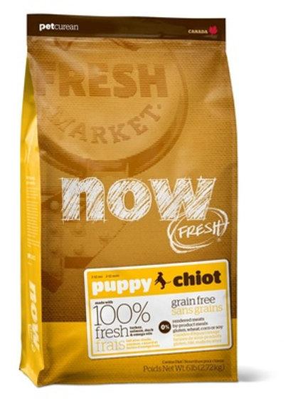 NOW FRESH grain free puppy adult dog НАУ ФРЕШ беззерновой для щенков, с индейкой
