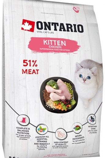 Ontario для котят, с курицей