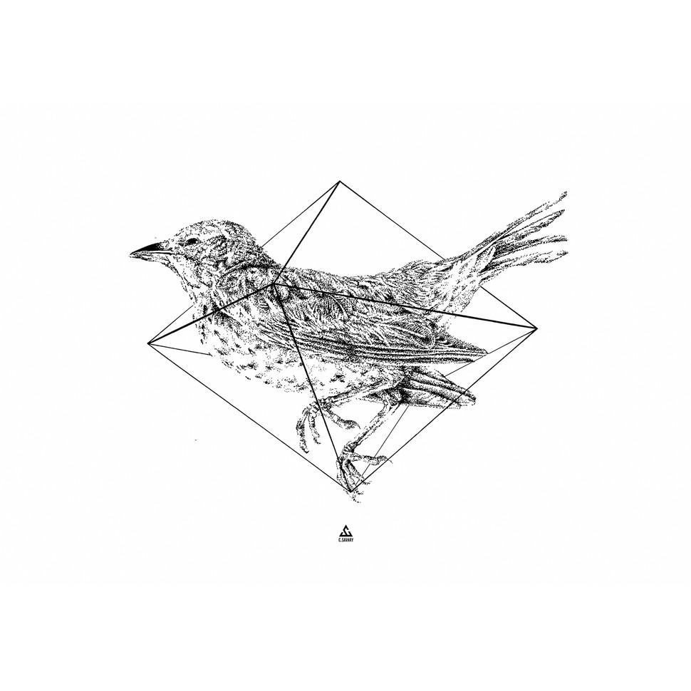 bird_low_01.jpg