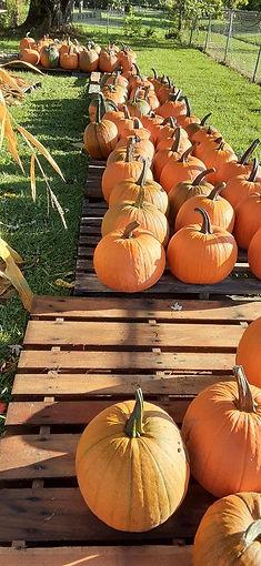assorted sizes pumpkins.jpg