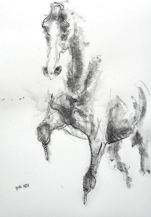 Equine Nude 8p