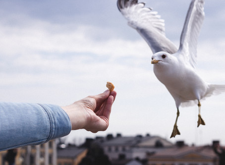 The Seagull and the homeless man [flash fiction]