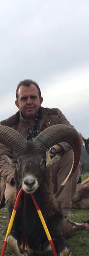 Охота на Муфлона в Испании
