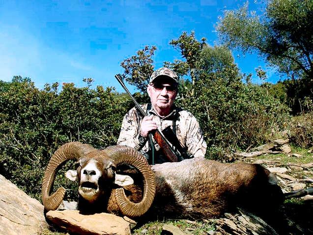 Iberian Mouflon hunting